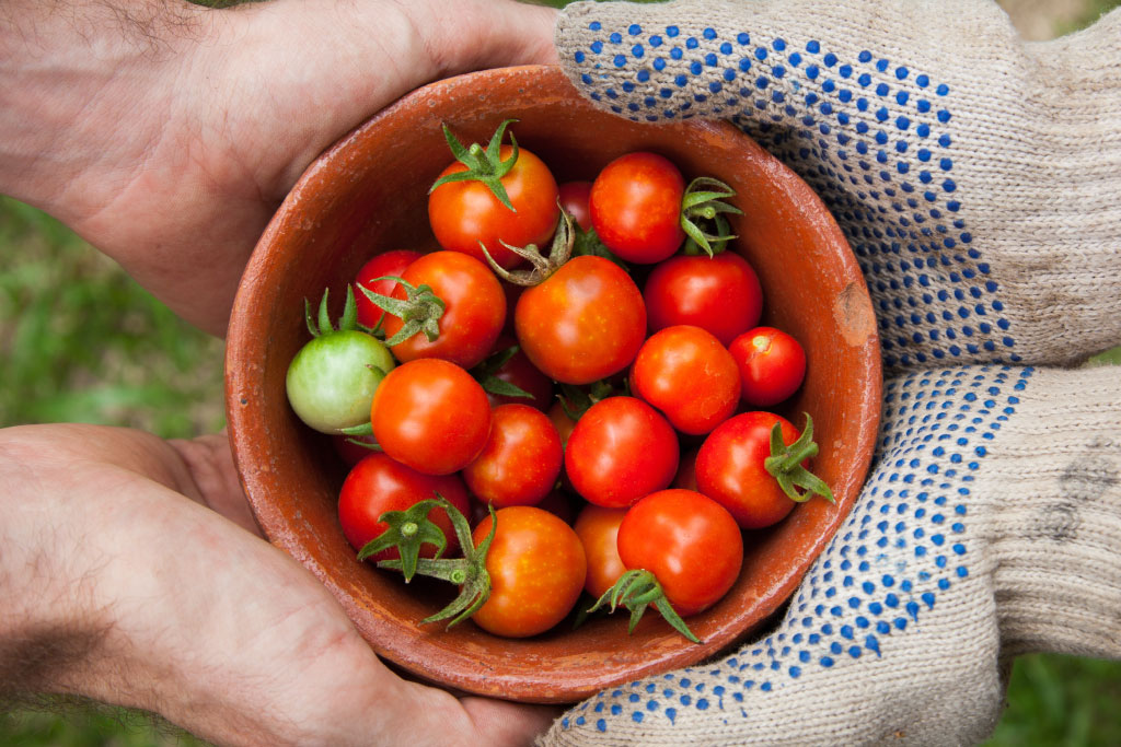 8 Vegetables Every Heirloom Grower Must Have In Their Garden