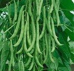 Dirt Goddess Super Seeds  1 Bulk Organic Kentucky Wonder Pole Beans (1/2 Lb)