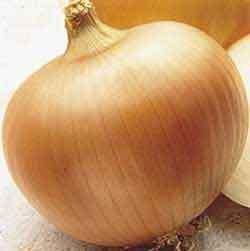 Seed Kingdom Heirloom Seed 1 Onion Yellow Sweet Spanish Great Heirloom Vegetable by Seed Kingdom Bulk 5,000 Seeds