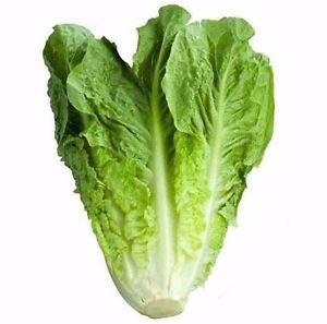 "Isla's Garden Seeds Heirloom Seed 1 ""Parris Island"" Romaine Lettuce Seeds, 1000+ Premium Heirloom Seeds, Delicious & Crisp! (Isla's Garden Seeds), Non GMO, 85% Germination, Highest Quality!"