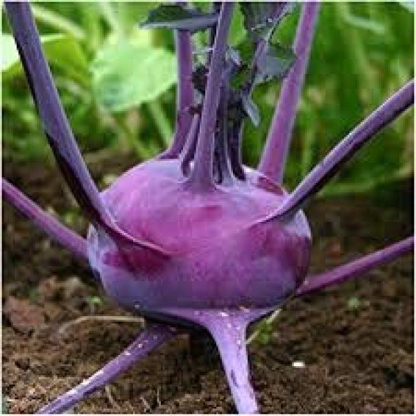 Isla's Garden Seeds Organic Seed 2 Purple Vienna Kohlrabi Seeds, 300+ Premium Heirloom Seeds, ON SALE!, (Isla's Garden Seeds), Non Gmo Organic, Survival Seeds, 90% Germination, Highest Quality