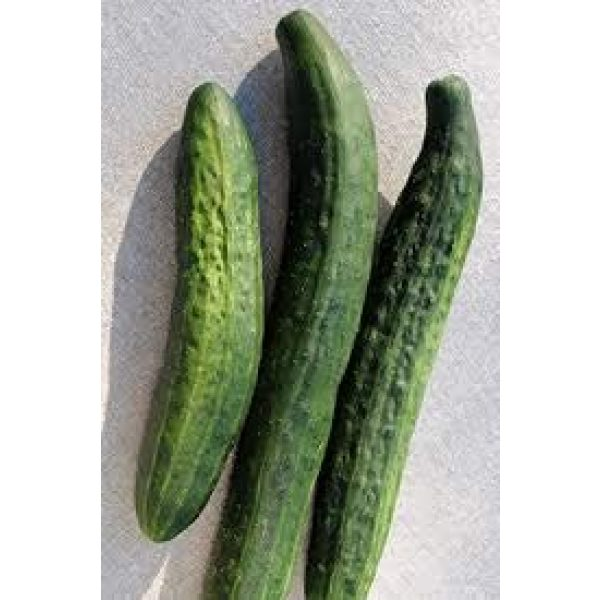 Isla's Garden Seeds Heirloom Seed 3 Green Dragon Cucumber Seeds, Giant Cucumbers 30 to 45 cm Long!,Great for Your Home Garden! 100+ Premium Heirloom Seeds,(Isla's Garden Seeds), 95% Germination Rate, Non GMO, Highest Quality
