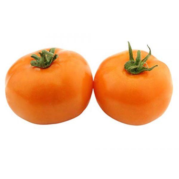 Marde Ross & Company Organic Seed 1 Organic Orange Persimmon Tomato Seeds - Heirloom Large Tomato