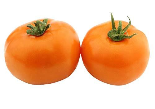 Marde Ross & Company  1 Organic Orange Persimmon Tomato Seeds - Heirloom Large Tomato