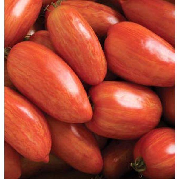 Isla's Garden Seeds Heirloom Seed 5 Speckled Roman Tomato Seeds, 100+ Premium Heirloom Seeds!, Delicious Hybrid! (Isla's Garden Seeds), Solanum lycopersicum, Non GMO, 85% Germination, Open Pollinated, Highest Quality.