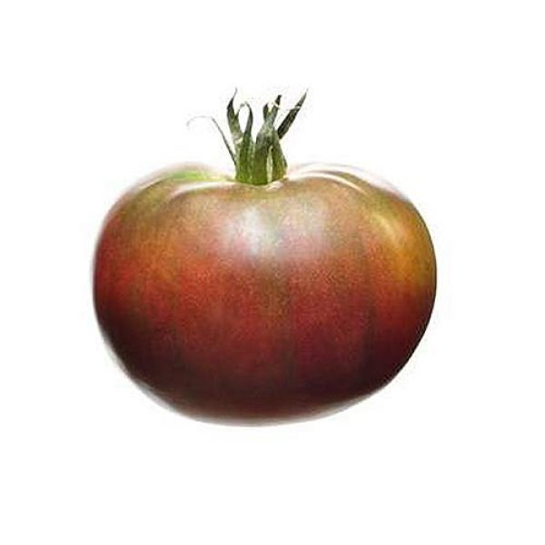 Marde Ross & Company Organic Seed 1 Black Krim Tomato Seeds - Organic Heirloom Large Tomato - One of The Most Delicious Tomatoes for Home Growing, Non GMO - Neonicotinoid-Free.