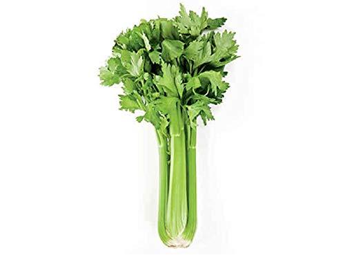 David's Garden Seeds  1 David's Garden Seeds Celery Tango 6477 (Green) 100 Non-GMO