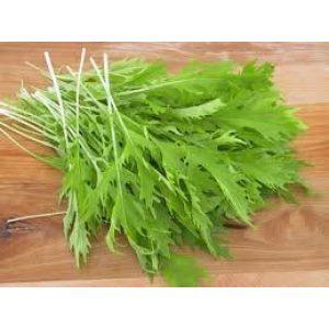 Seed Kingdom Heirloom Seed 1 Mustard Mizuna Great Heirloom Vegetable by Seed Kingdom Bulk 5 Lb Seeds