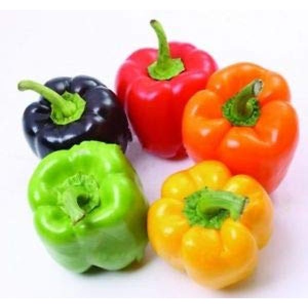 Isla's Garden Seeds Heirloom Seed 2 Rainbow Blend Sweet Bell Pepper Seeds, 50+ Premium Heirloom Seeds,So Much Fun!! A Must Have for Your Home Garden! (Isla's Garden Seeds), Non GMO, 85-90% Germination Rates, Seeds