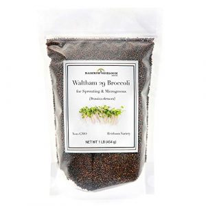Rainbow Heirloom Seed Co.  1 Broccoli Sprouting Seeds for Broccoli Sprouts & Microgreens | Waltham 29 Variety | Non GMO Heirloom Seeds | 1 LB Resealable Bag | Perfect for Sprouting Jar & Seed Tray | Rainbow Heirloom Seed Co.