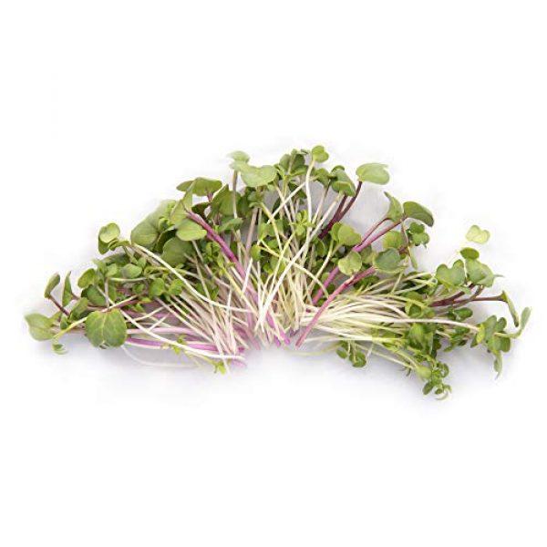 Rainbow Heirloom Seed Co. Heirloom Seed 2 Super Spicy Greens Microgreen Seed Mix | Contains Garden Cress Seeds, Radish, Mustard, Turnip & Arugula Microgreen Seeds | Bulk 1 LB Resealable Bag | Non GMO Heirloom Seeds | Rainbow Heirloom Seed Co.