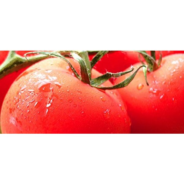 Isla's Garden Seeds Organic Seed 2 Marglobe Tomato 500+Seeds, Premium Heirloom Seeds, Top Selling Tomato Seeds, (Isla's Garden Seeds), Non Gmo Organic Survival Seeds, 90% Germination, Highest Quality