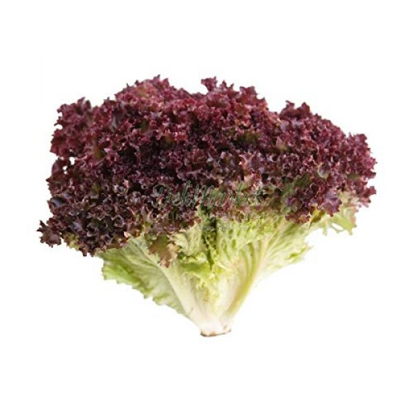 Isla's Garden Seeds Heirloom Seed 4 Lolo Rosso Leaf Lettuce Seeds, 500+ Premium Heirloom Seeds, Beautiful Green Color with Dark Pink Edges, (Isla's Garden Seeds), Non GMO,85-90% Germination Rates, Highest Quality Seed, 100% Pure