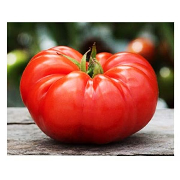Marde Ross & Company Organic Seed 1 Organic Beefsteak Tomato Seeds - A Delicious Heirloom Tomato for Home Growing, Non GMO - Neonicotinoid-Free.