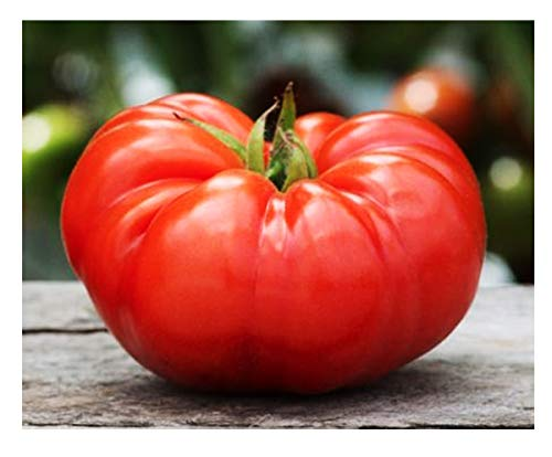 Marde Ross & Company  1 Organic Beefsteak Tomato Seeds - A Delicious Heirloom Tomato for Home Growing