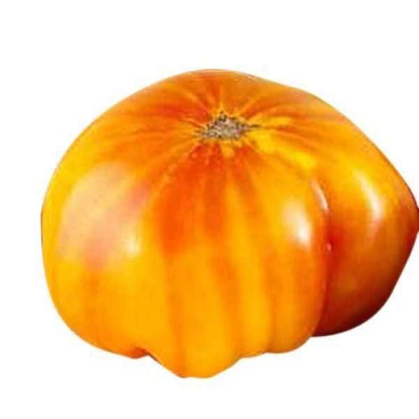 Marde Ross & Company Organic Seed 1 Organic Hillbilly Potato Leaf Heirloom Tomato Seeds - Large Tomato - One of The Most Delicious Tomatoes for Home Growing, Non GMO - Neonicotinoid-Free.