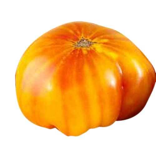 Marde Ross & Company  1 Organic Hillbilly Potato Leaf Heirloom Tomato Seeds - Large Tomato - One of The Most Delicious Tomatoes for Home Growing