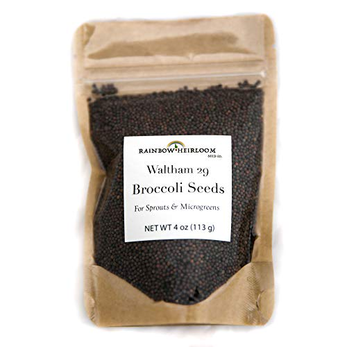 Rainbow Heirloom Seed Co.  2 Heirloom Sprouting & Microgreen Seed Variety Pack   Contains Waltham 29 Broccoli Sprouts Seeds