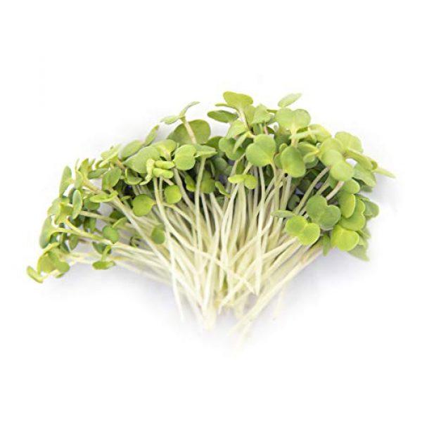 Rainbow Heirloom Seed Co. Heirloom Seed 2 Arugula Microgreen Seeds Bulk 1 LB Resealable Bag   Spicy & Flavorful Greens   Non GMO Heirloom Seeds   Rocket Salad by Rainbow Heirloom Seed Co.