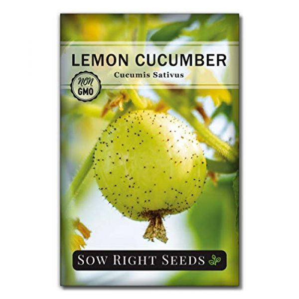 Sow Right Seeds Heirloom Seed 1 Sow Right Seeds - Lemon Cucumber Seeds for Planting - Non-GMO Heirloom Seeds with Instructions to Plant and Grow a Home Vegetable Garden, Great Gardening Gift (1)
