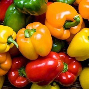 Isla's Garden Seeds Heirloom Seed 1 Rainbow Blend Sweet Bell Pepper Seeds, 50+ Premium Heirloom Seeds,So Much Fun!! A Must Have for Your Home Garden! (Isla's Garden Seeds), Non GMO, 85-90% Germination Rates, Seeds