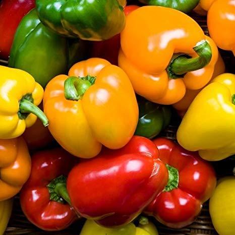 Isla's Garden Seeds  1 Rainbow Blend Sweet Bell Pepper Seeds