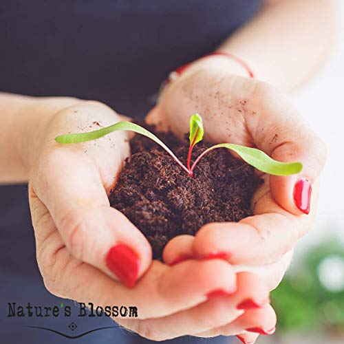 Nature's Blossom  6 Nature's Blossom Microgreen Vegetables Sprouting Kit. Beginner Gardeners Seed Starter Kit to Grow 4 Types of Vegetable Sprouts Indoors. Complete DIY Home Gardening Set