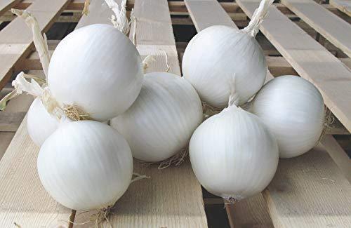 SeedsUA  5 Seeds Onion White Queen Giant Vegetable Heirloom Ukraine