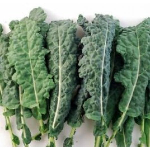 Isla's Garden Seeds Heirloom Seed 2 Forage Premier Kale Seeds, 1000+ Premium Heirloom Seeds, Rich Delicious Leafy Kale! Fantastic Addition to Your Home Garden! (Isla's Garden Seeds), Non GMO, 90% Germination, Highest Quality Seeds