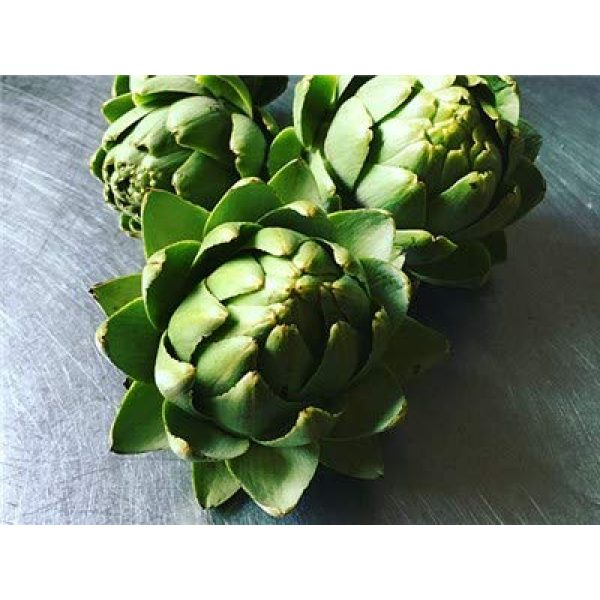 Isla's Garden Seeds Heirloom Seed 1 Green Globe Artichoke Seeds, 50+ Premium Heirloom Seeds, Top Selling Item, (Isla's Garden Seeds), Non GMO, 90% Germination, Highest Quality Seed, 100% Pure