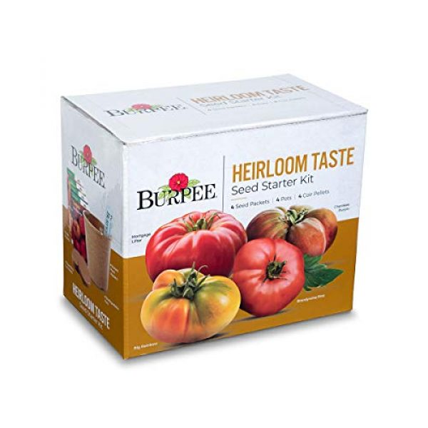 Burpee Heirloom Seed 1 Burpee Heirloom Taste Starting Kit Mortgage Lifter, Cherokee Purple, Big Rainbow & Brandywine Pink | 4 Beefsteak Tomato Seed Packets, 4 Pots, 4 Coir Pellets & 4 Plant Markers