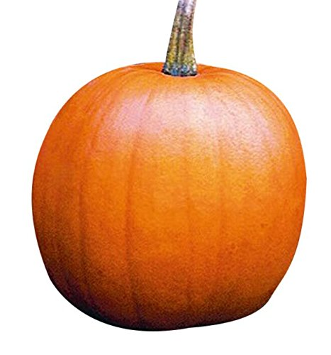 Marde Ross & Company  1 Jack O Lantern Pumpkins Seeds - Heirloom and The Classic for Carving and Cooking