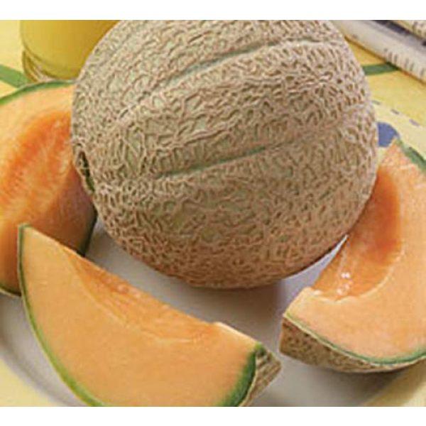 Seed Kingdom Heirloom Seed 1 Cantaloupe Hearts of Gold Great Heirloom Vegetable Seeds by Seed Kingdom Bulk 2,000 Seeds