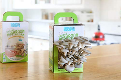Harvest Gourmet Oyster Mushrooms In 10 days