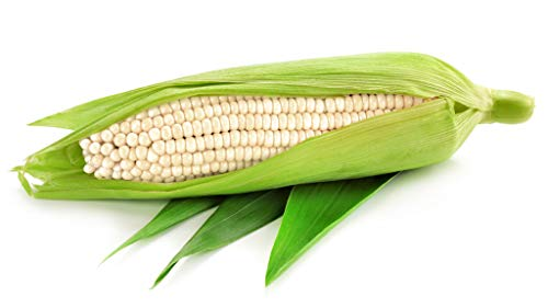 Isla's Garden Seeds  1 Silver Queen White Corn