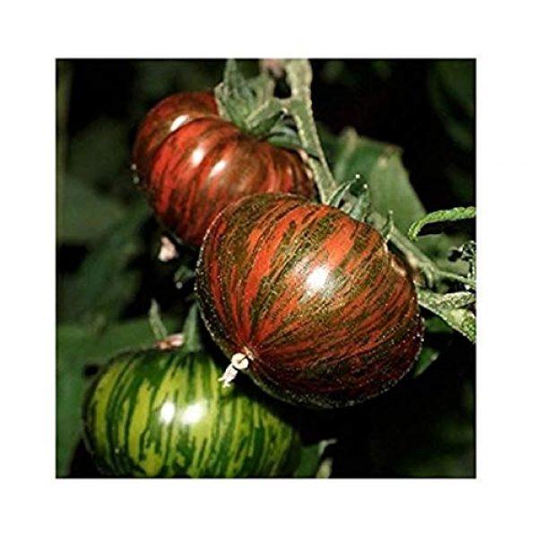 David's Garden Seeds Heirloom Seed 1 David's Garden Seeds Tomato Slicing Chocolate Stripes SL1139 (Multi) 50 Non-GMO, Heirloom Seeds