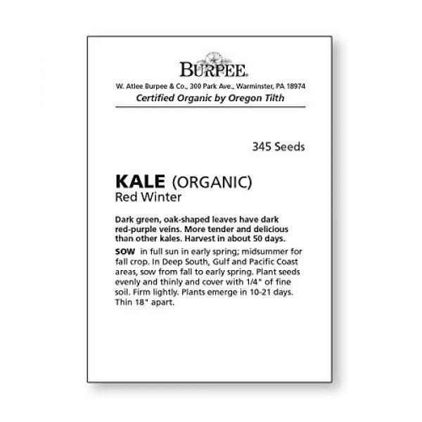 Burpee Organic Seed 4 Burpee Red Winter Kale Seeds 345 seeds