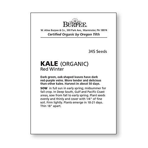 Burpee  4 Burpee Red Winter Kale Seeds 345 seeds