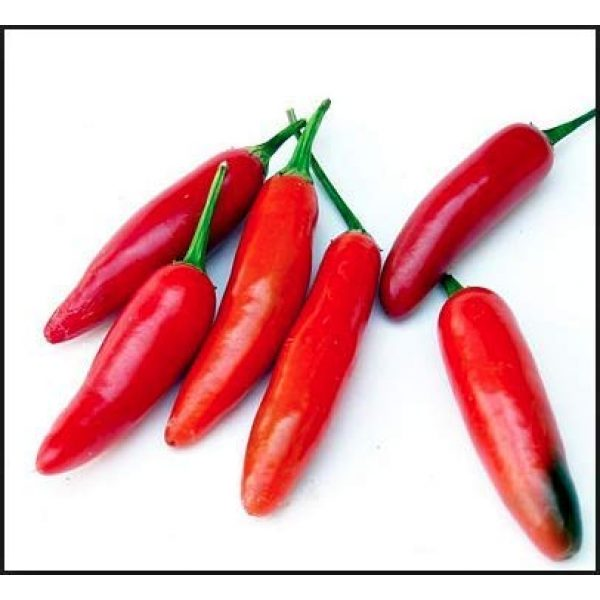 Isla's Garden Seeds Organic Seed 4 Serrano Hot Pepper Seeds, 100+ Premium Heirloom Seeds, 90% Germination Rates, Produces fiery hot pepper plants! - Capsicum annuum - (Isla's Garden Seeds) - Non Gmo Organic, Highest Quality