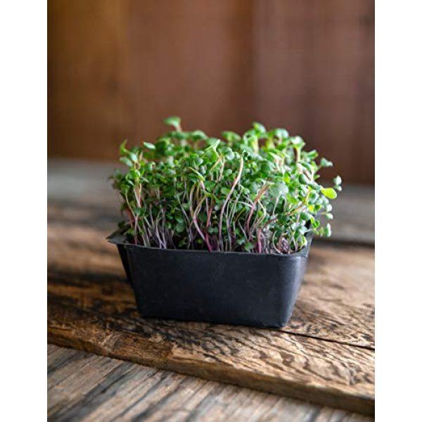 Rainbow Heirloom Seed Co. Heirloom Seed 4 Superfood Microgreen Seeds Mix | for Microgreens Growing Trays | 1 LB | Heirloom Non GMO Purple Kohlrabi, Collard, Radish, Turnip & Broccoli Sprouts Seeds | Rainbow Heirloom Seed Co.