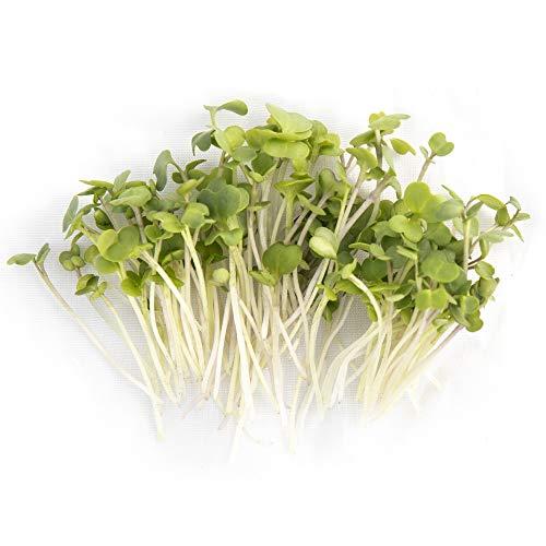Turnip & Broccoli Sprouting Seeds   Non GMO Heirloom Seeds   1 LB Resealable Bag   Rainbow Heirloom Seed Co.