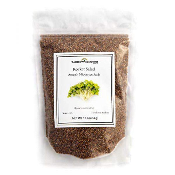Rainbow Heirloom Seed Co. Heirloom Seed 1 Arugula Microgreen Seeds Bulk 1 LB Resealable Bag   Spicy & Flavorful Greens   Non GMO Heirloom Seeds   Rocket Salad by Rainbow Heirloom Seed Co.