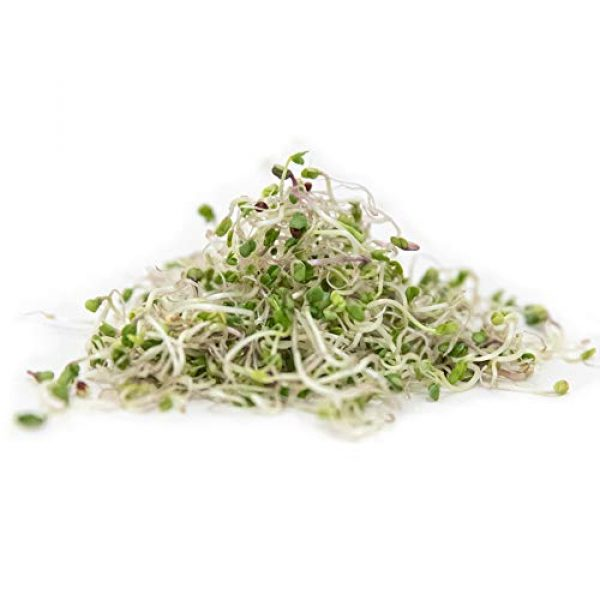 Rainbow Heirloom Seed Co. Heirloom Seed 6 Broccoli Sprouting Seeds for Broccoli Sprouts & Microgreens | Waltham 29 Variety | Non GMO Heirloom Seeds | 1 LB Resealable Bag | Perfect for Sprouting Jar & Seed Tray | Rainbow Heirloom Seed Co.
