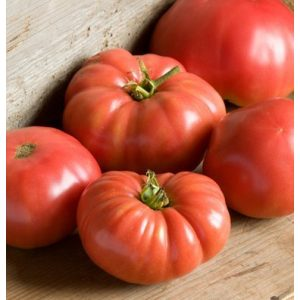 David's Garden Seeds Organic Seed 1 David's Garden Seeds Tomato Beefsteak German Johnson SL3815 (Red) 50 Non-GMO, Organic, Heirloom Seeds