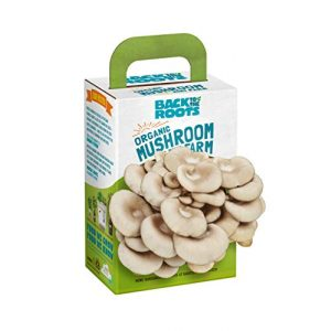 Back to the Roots Organic Seed 1 Back to the Roots Organic Mini Mushroom Grow Kit, Harvest Gourmet Oyster Mushrooms In 10 days, Top Gardening Gift, Holiday Gift, & Unique Gift