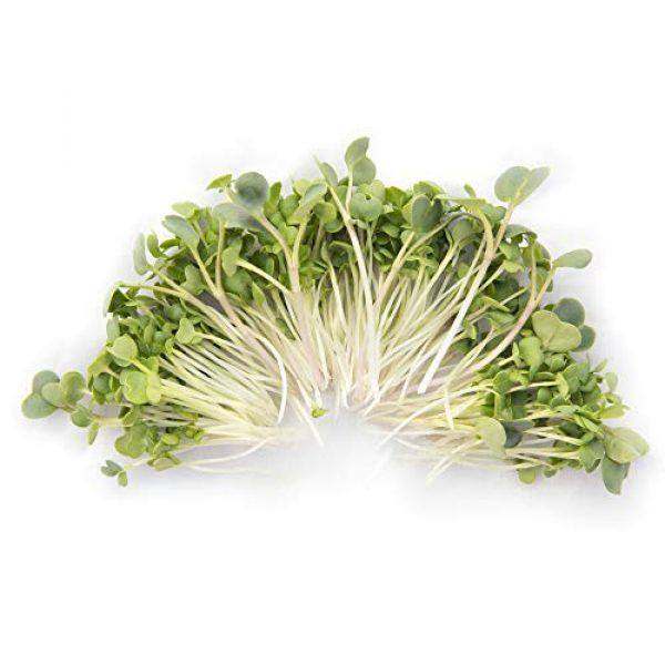 Rainbow Heirloom Seed Co. Heirloom Seed 2 Eastern Sun Asian Microgreen Seeds Mix | Contains Mizuna, Pak Choi, Cabbage, Mustard & Radish Sprout Seeds | Non GMO Heirloom Seeds | Bulk 1 LB Resealable Bag | Rainbow Heirloom Seed Co.