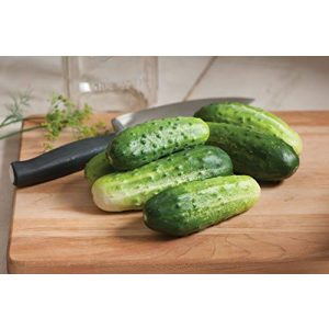 David's Garden Seeds Organic Seed 1 David's Garden Seeds Cucumber Pickling H-19 Little Leaf 3311 (Green) 50 Non-GMO, Open Pollinated Seeds
