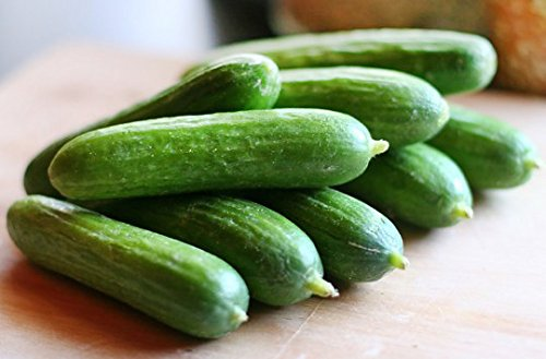 Harley Seeds  3 30+ Persian Beit Alpha (A.k.a. Lebanese) Cucumber Seeds Heirloom NON-GMO Crispy Fragrant From USA