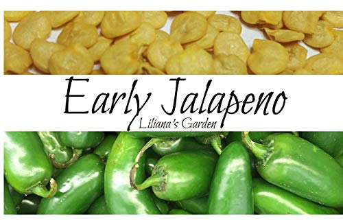 Liliana's Garden  1 Jalapeno Seeds - Early Jalapeno - Fastest Growing Jalapeno - Heirloom - Liliana's Garden