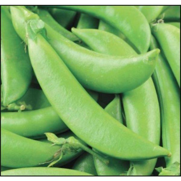 Isla's Garden Seeds Heirloom Seed 2 Sugar Ann Snap Pea Garden Seeds, 50+ Premium Heirloom Seeds, Sweet & Delicious Flavor in Your Home Garden!, (Isla's Garden Seeds), Non GMO, 95% Germination Rates, Highest Quality Seeds